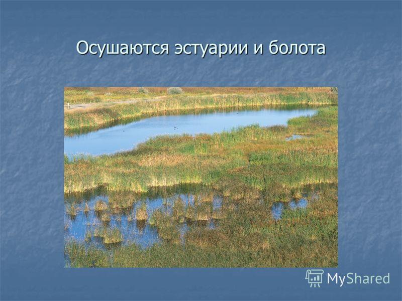 Осушаются эстуарии и болота