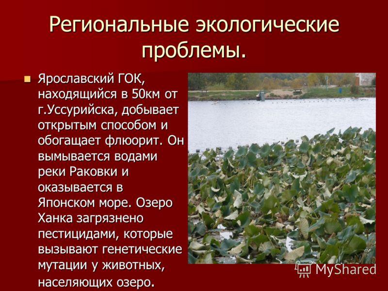 Региональные экологические проблемы Основная зона экологического бедствия – это юг Приморского края. В Амурский залив сбрасываются неочищенные стоки г. Владивостока, впадает загрязненная река Раздольная, делает сбросы ТОФ, в Уссурийский залив сбрасыв