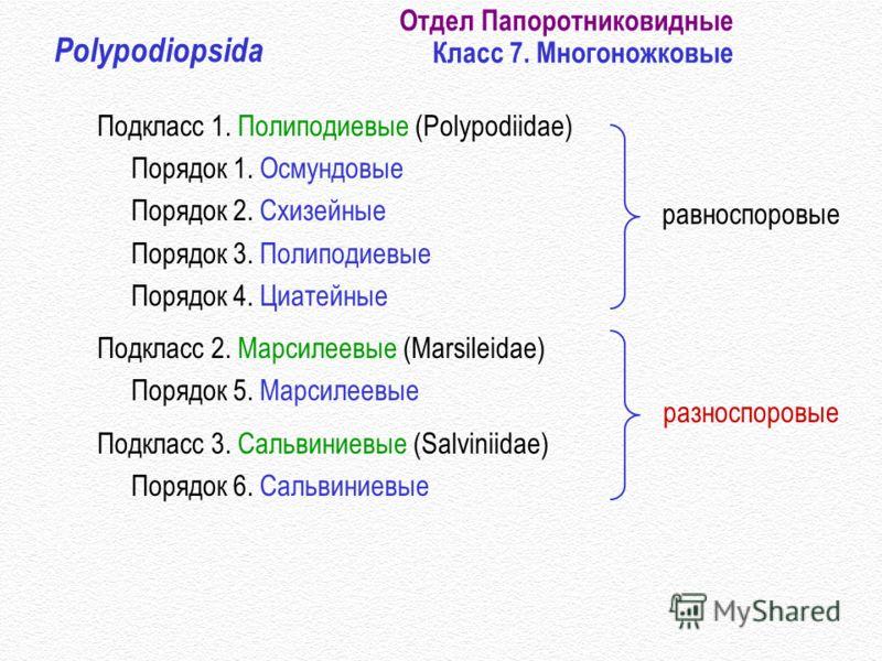 Отдел Папоротниковидные Класс 7. Многоножковые Polypodiopsida Подкласс 1. Полиподиевые (Polypodiidae) Порядок 1. Осмундовые Порядок 2. Схизейные Порядок 3. Полиподиевые Порядок 4. Циатейные Подкласс 2. Марсилеевые (Marsileidae) Порядок 5. Марсилеевые
