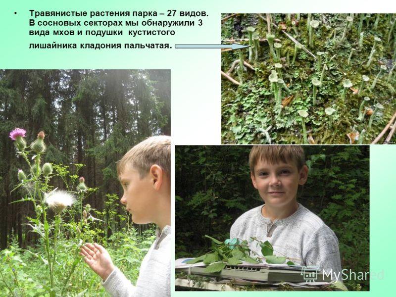 Травянистые растения парка – 27 видов. В сосновых секторах мы обнаружили 3 вида мхов и подушки кустистого лишайника кладония пальчатая.