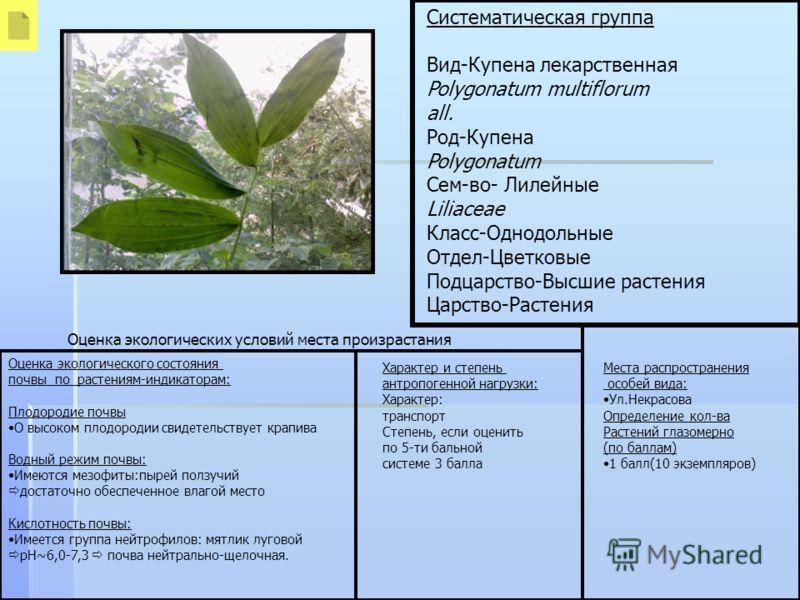 Систематическая группа Вид-Купена лекарственная Polygonatum multiflorum all. Род-Купена Polygonatum Сем-во- Лилейные Liliaceae Класс-Однодольные Отдел-Цветковые Подцарство-Высшие растения Царство-Растения Оценка экологического состояния почвы по раст