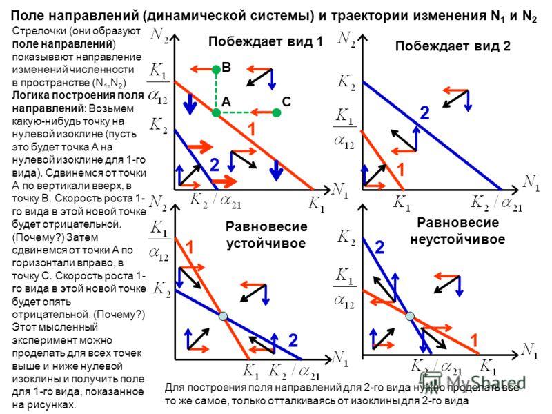 Поле направлений (динамической системы) и траектории изменения N 1 и N 2 1 2 Побеждает вид 1 2 Побеждает вид 2 1 2 Равновесие устойчивое 1 2 Равновесие неустойчивое 1 Стрелочки (они образуют поле направлений) показывают направление изменений численно