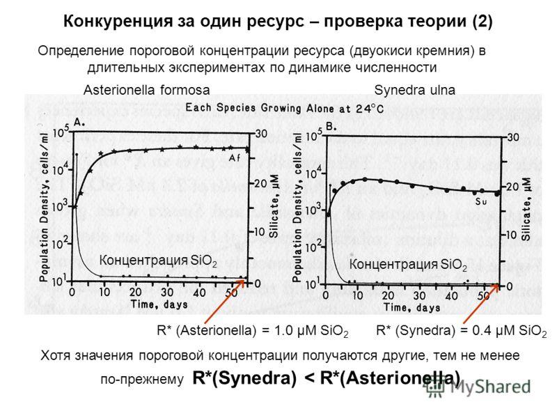 Asterionella formosaSynedra ulna Концентрация SiO 2 R* (Asterionella) = 1.0 μM SiO 2 R* (Synedra) = 0.4 μM SiO 2 Концентрация SiO 2 Хотя значения пороговой концентрации получаются другие, тем не менее по-прежнему R*(Synedra) < R*(Asterionella) Конкур