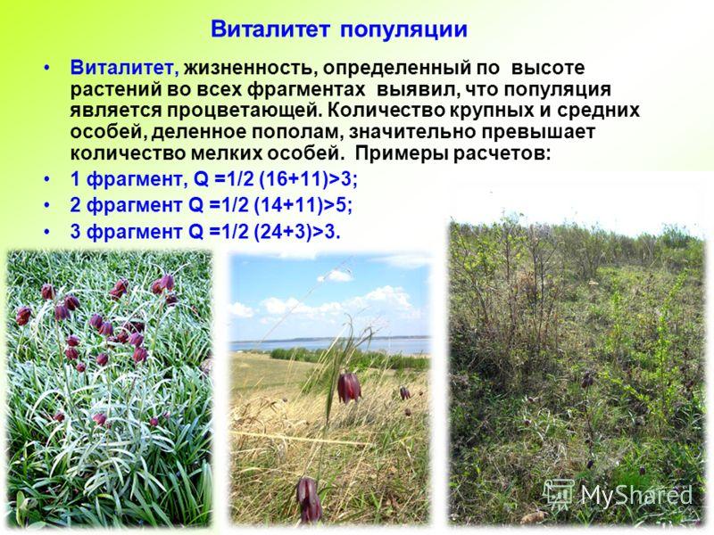 Виталитет популяции Виталитет, жизненность, определенный по высоте растений во всех фрагментах выявил, что популяция является процветающей. Количество крупных и средних особей, деленное пополам, значительно превышает количество мелких особей. Примеры