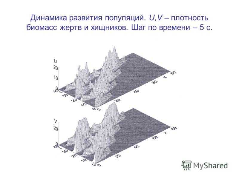 Динамика развития популяций. U,V – плотность биомасс жертв и хищников. Шаг по времени – 5 с.