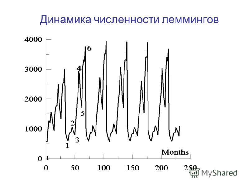 Динамика численности леммингов