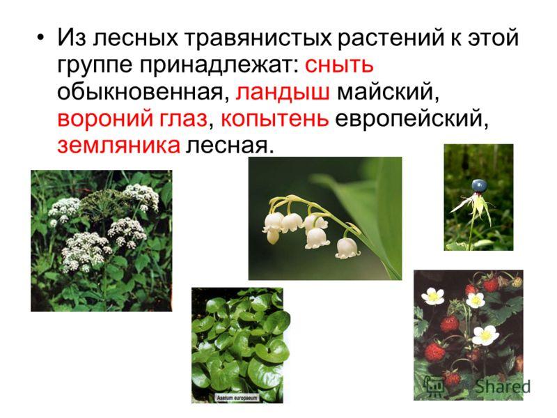 Из лесных травянистых растений к этой группе принадлежат: сныть обыкновенная, ландыш майский, вороний глаз, копытень европейский, земляника лесная.