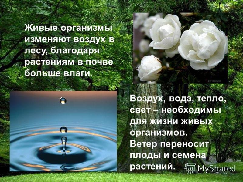 Живые организмы изменяют воздух в лесу, благодаря растениям в почве больше влаги. Воздух, вода, тепло, свет – необходимы для жизни живых организмов. Ветер переносит плоды и семена растений.