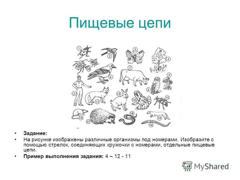 Пищевые цепи Задание: На рисунке изображены различные организмы под номерами. Изобразите с помощью стрелок, соединяющих кружочки с номерами, отдельные пищевые цепи. Пример выполнения задания: 4 – 12 - 11