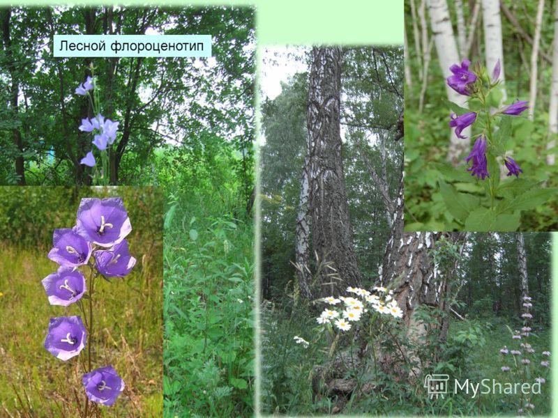 Лесной флороценотип