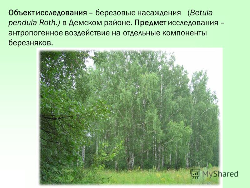 Объект исследования – березовые насаждения (Betula pendula Roth.) в Демском районе. Предмет исследования – антропогенное воздействие на отдельные компоненты березняков.