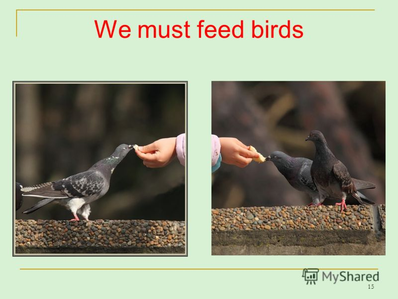 15 We must feed birds