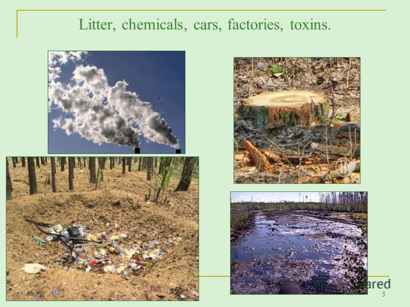 Litter, chemicals, cars, factories, toxins. 5