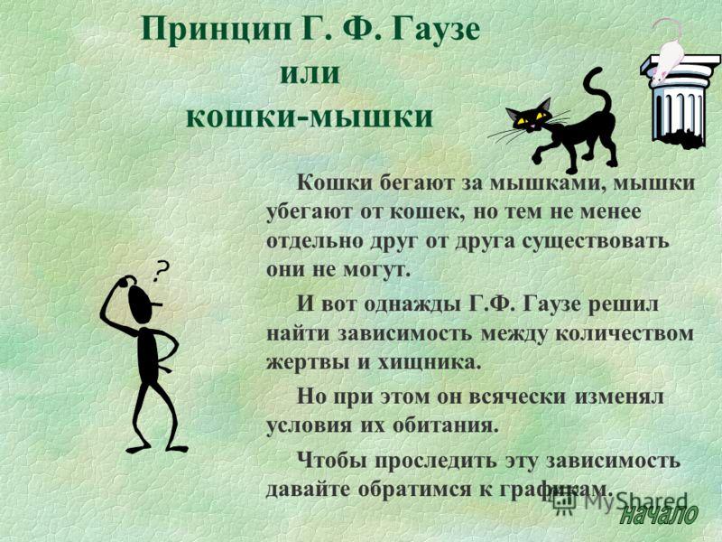 Принцип Г. Ф. Гаузе или кошки-мышки Кошки бегают за мышками, мышки убегают от кошек, но тем не менее отдельно друг от друга существовать они не могут. И вот однажды Г.Ф. Гаузе решил найти зависимость между количеством жертвы и хищника. Но при этом он