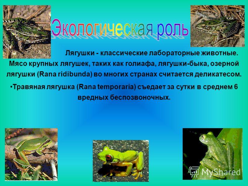 Лягушки - классические лабораторные животные. Мясо крупных лягушек, таких как голиафа, лягушки-быка, озерной лягушки (Rana ridibunda) во многих странах считается деликатесом. Травяная лягушка (Rana temporaria) съедает за сутки в среднем 6 вредных бес