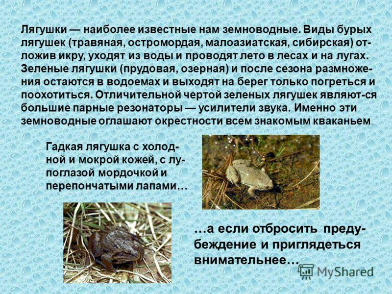 Гадкая лягушка с холод- ной и мокрой кожей, с лу- поглазой мордочкой и перепончатыми лапами… …а если отбросить преду- беждение и приглядеться внимательнее… Лягушки наиболее известные нам земноводные. Виды бурых лягушек (травяная, остромордая, малоази
