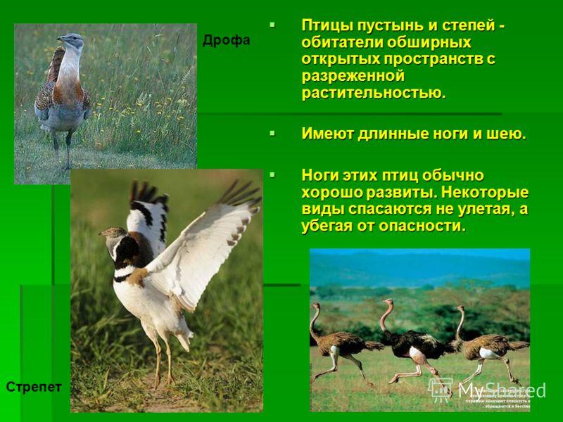 Птицы пустынь и степей - обитатели обширных открытых пространств с разреженной растительностью. Птицы пустынь и степей - обитатели обширных открытых пространств с разреженной растительностью. Имеют длинные ноги и шею. Имеют длинные ноги и шею. Ноги э