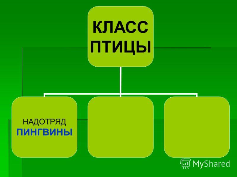 КЛАСС ПТИЦЫ НАДОТРЯД ПИНГВИНЫ