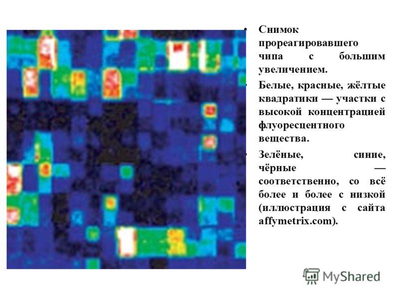 Снимок прореагировавшего чипа с большим увеличением. Белые, красные, жёлтые квадратики участки с высокой концентрацией флуоресцентного вещества. Зелёные, синие, чёрные соответственно, со всё более и более с низкой (иллюстрация с сайта affymetrix.com)