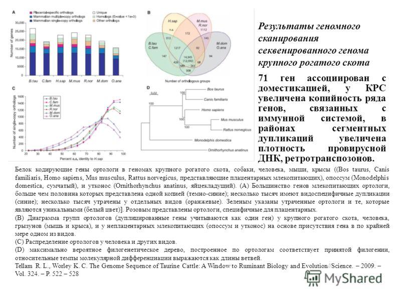 Результаты геномного сканирования секвенированного генома крупного рогатого скота Белок кодирующие гены ортологи в геномах крупного рогатого скота, собаки, человека, мыши, крысы ((Bos taurus, Canis familiaris, Homo sapiens, Mus musculus, Rattus norve