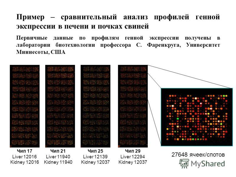 Пример – сравнительный анализ профилей генной экспрессии в печени и почках свиней Первичные данные по профилям генной экспрессии получены в лаборатории биотехнологии профессора С. Фаренкруга, Университет Миннесоты, США Чип 17 Liver 12016 Kidney 12016