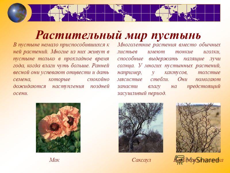 В пустыне немало приспособившихся к ней растений. Многие из них живут в пустыне только в прохладное время года, когда влаги чуть больше. Ранней весной они успевают отцвести и дать семена, которые спокойно дожидаются наступления поздней осени. Растите