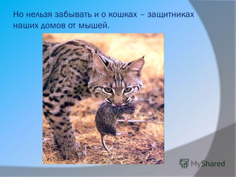 Но нельзя забывать и о кошках – защитниках наших домов от мышей. Бородкин Игорь Судьба бездомных животных