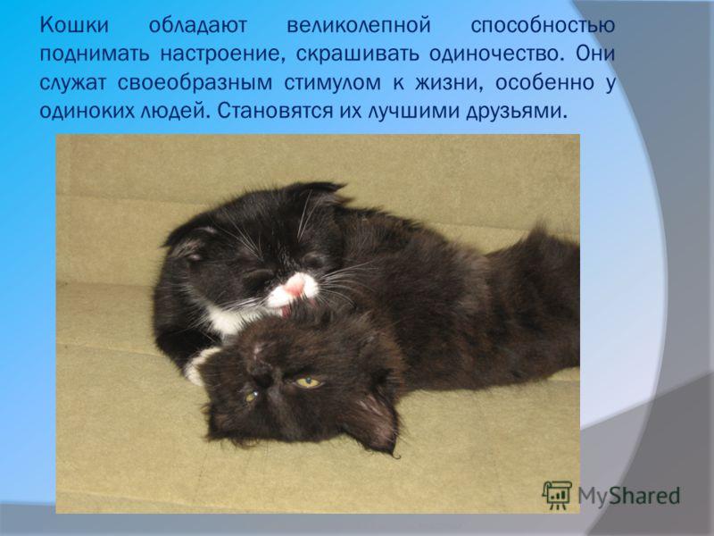 Кошки обладают великолепной способностью поднимать настроение, скрашивать одиночество. Они служат своеобразным стимулом к жизни, особенно у одиноких людей. Становятся их лучшими друзьями. Бородкин Игорь Судьба бездомных животных