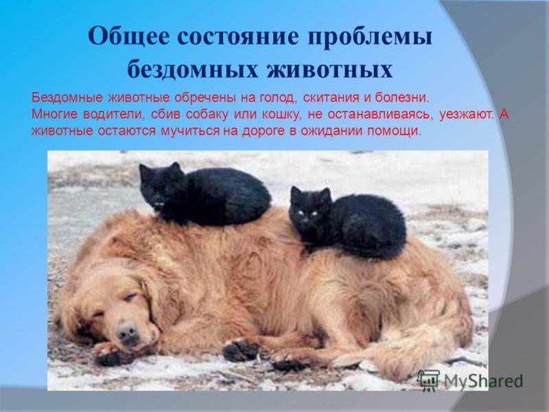 Общее состояние проблемы бездомных животных Бородкин Игорь