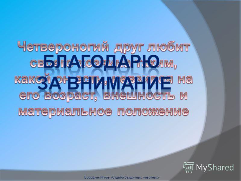 Бородкин Игорь «Судьба бездомных животных»