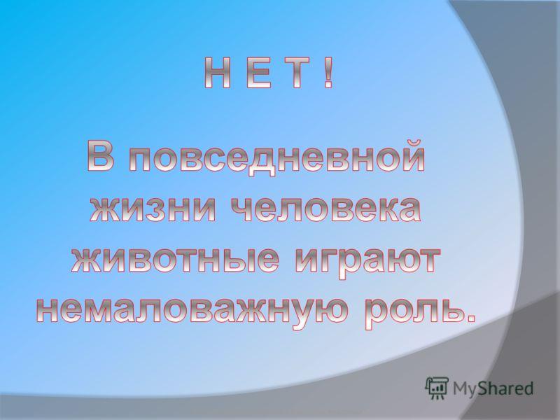 Бородкин Игорь Судьба бездомных животных