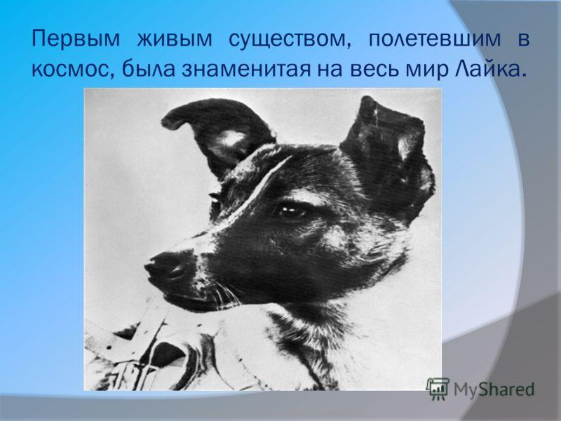 Первым живым существом, полетевшим в космос, была знаменитая на весь мир Лайка. Бородкин Игорь Судьба бездомных животных