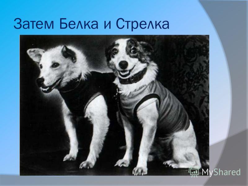 Затем Белка и Стрелка Бородкин Игорь Судьба бездомных животных
