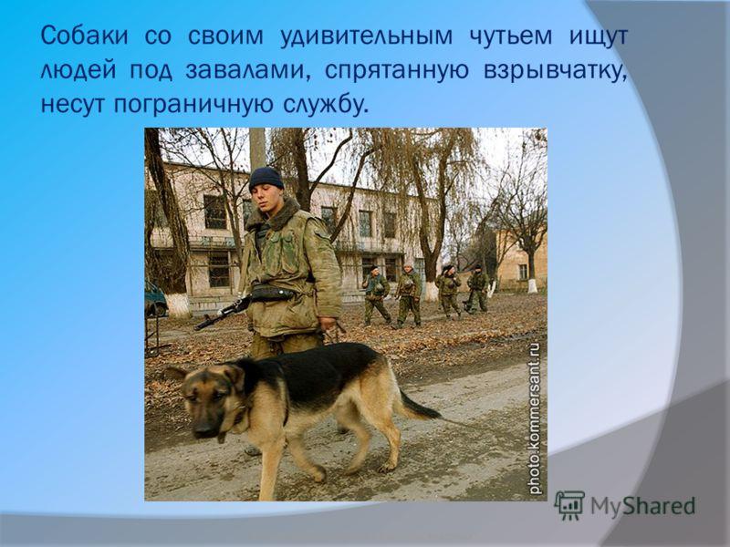 Собаки со своим удивительным чутьем ищут людей под завалами, спрятанную взрывчатку, несут пограничную службу. Бородкин Игорь Судьба бездомных животных