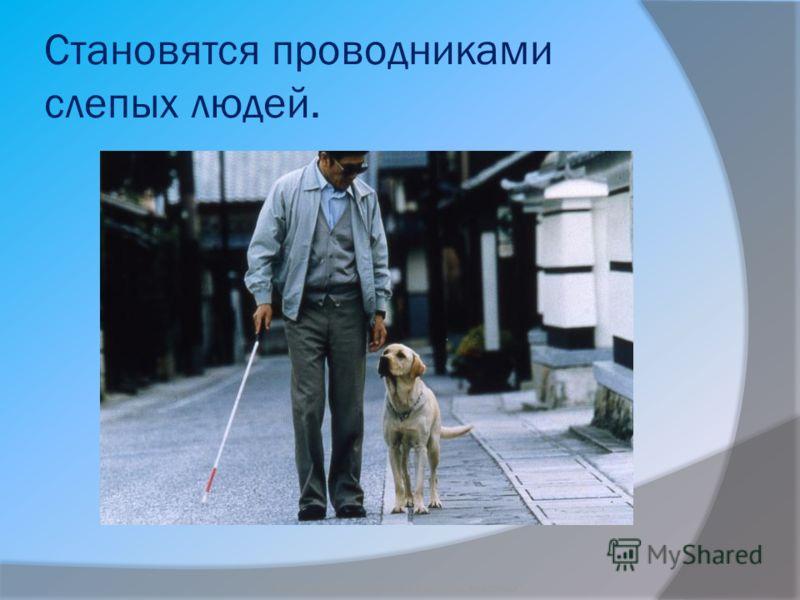 Становятся проводниками слепых людей. Бородкин Игорь Судьба бездомных животных