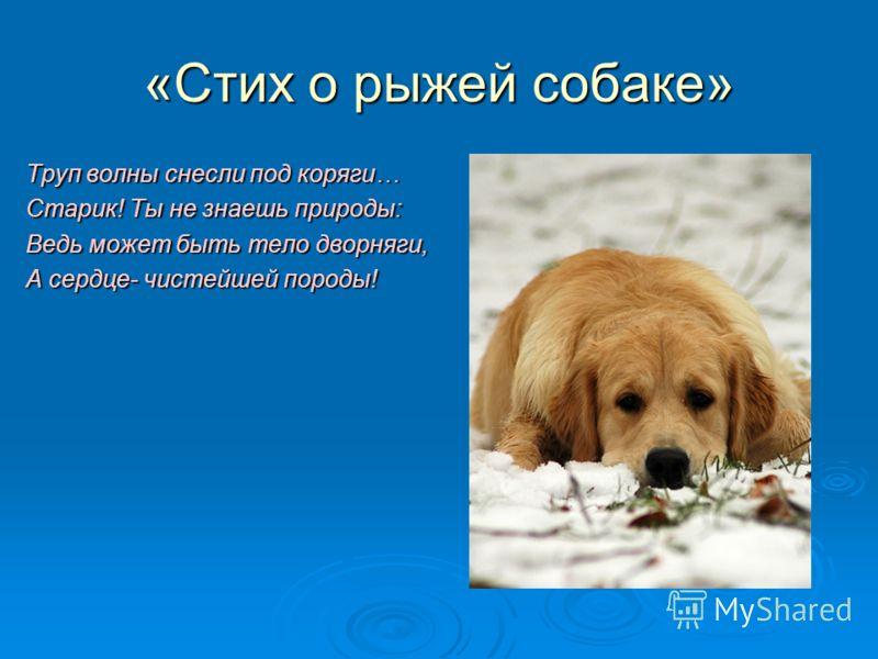«Стих о рыжей собаке» Труп волны снесли под коряги… Старик! Ты не знаешь природы: Ведь может быть тело дворняги, А сердце- чистейшей породы!
