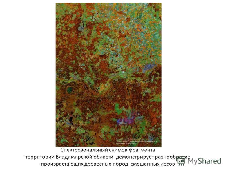 Спектрозональный снимок фрагмента территории Владимирской области демонстрирует разнообразие произрастающих древесных пород смешанных лесов