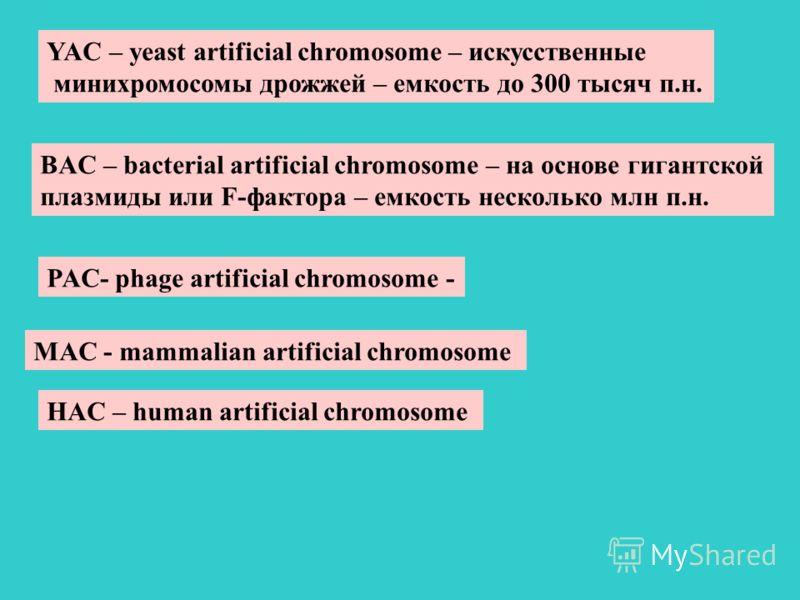 YAC – yeast artificial chromosome – искусственные минихромосомы дрожжей – емкость до 300 тысяч п.н. BAC – bacterial artificial chromosome – на основе гигантской плазмиды или F-фактора – емкость несколько млн п.н. PAC- phage artificial chromosome - MA
