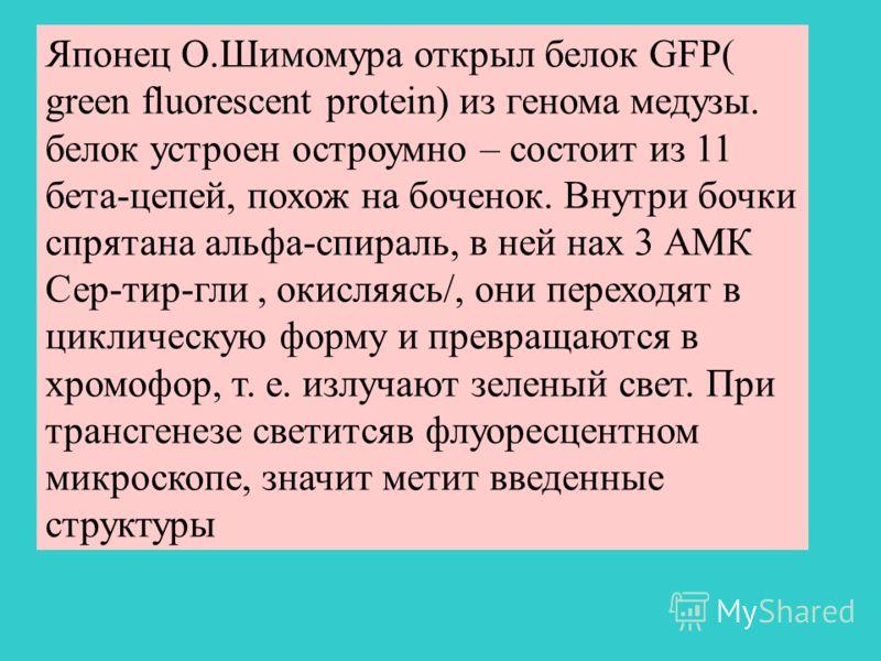 Японец О.Шимомура открыл белок GFP( green fluorescent protein) из генома медузы. белок устроен остроумно – состоит из 11 бета-цепей, похож на боченок. Внутри бочки спрятана альфа-спираль, в ней нах 3 АМК Сер-тир-гли, окисляясь/, они переходят в цикли