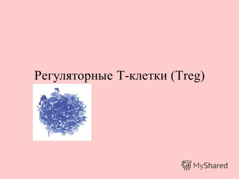 Регуляторные Т-клетки (Treg)