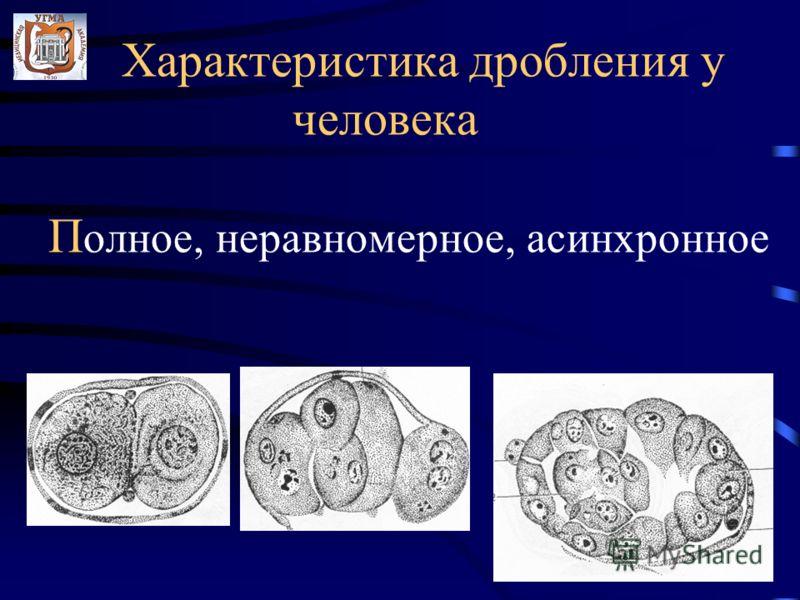 Характеристика дробления у человека П олное, неравномерное, асинхронное