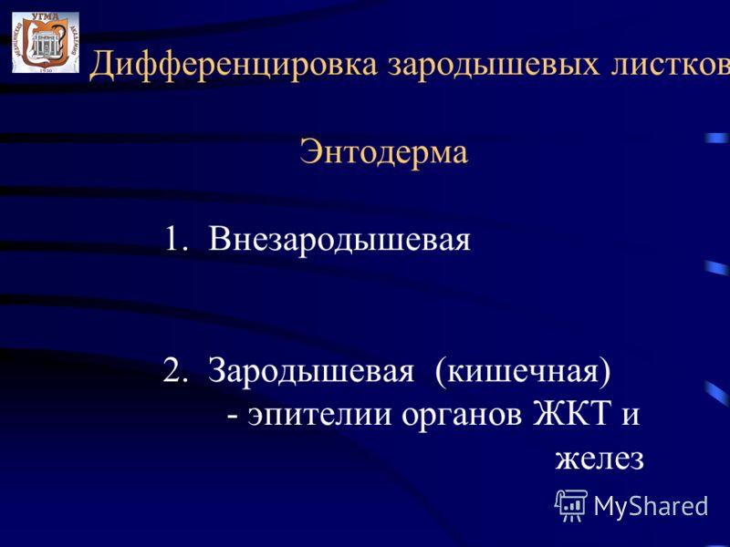 Дифференцировка зародышевых листков Энтодерма 1. Внезародышевая 2. Зародышевая (кишечная) - эпителии органов ЖКТ и желез