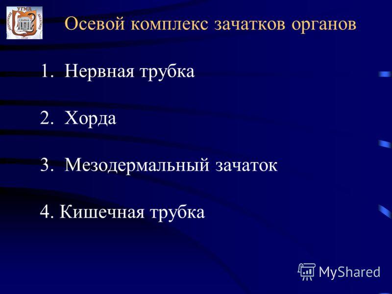 Осевой комплекс зачатков органов 1. Нервная трубка 2. Хорда 3. Мезодермальный зачаток 4. Кишечная трубка
