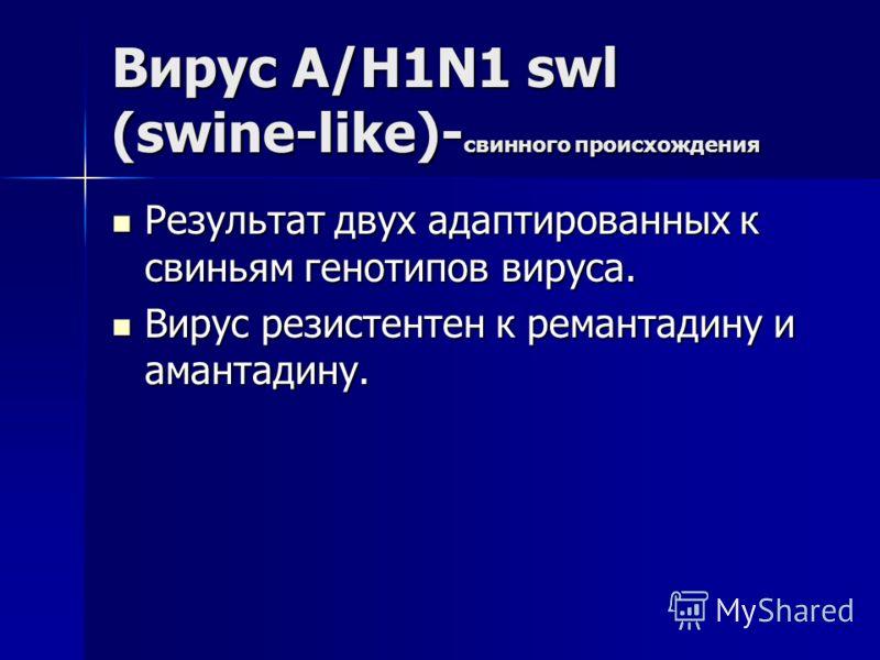 Вирус А/H1N1 swl (swine-like)- свинного происхождения Результат двух адаптированных к свиньям генотипов вируса. Результат двух адаптированных к свиньям генотипов вируса. Вирус резистентен к ремантадину и амантадину. Вирус резистентен к ремантадину и