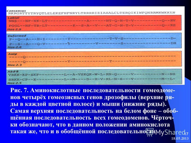 18.05.2013 16 Консервативный участок в гомеозисных генах получил назва- ние гомеобокс. Гомеобокс кодирует последовательность из 60 ами- нокислот, которая очень сходна у белков продуктов большинства гомеозисных генов. В составе белка эта последователь