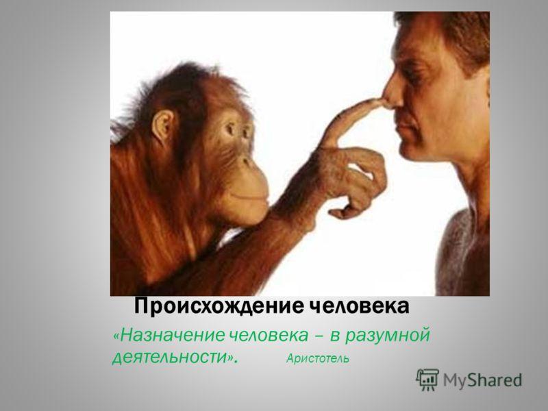 Происхождение человека «Назначение человека – в разумной деятельности». Аристотель