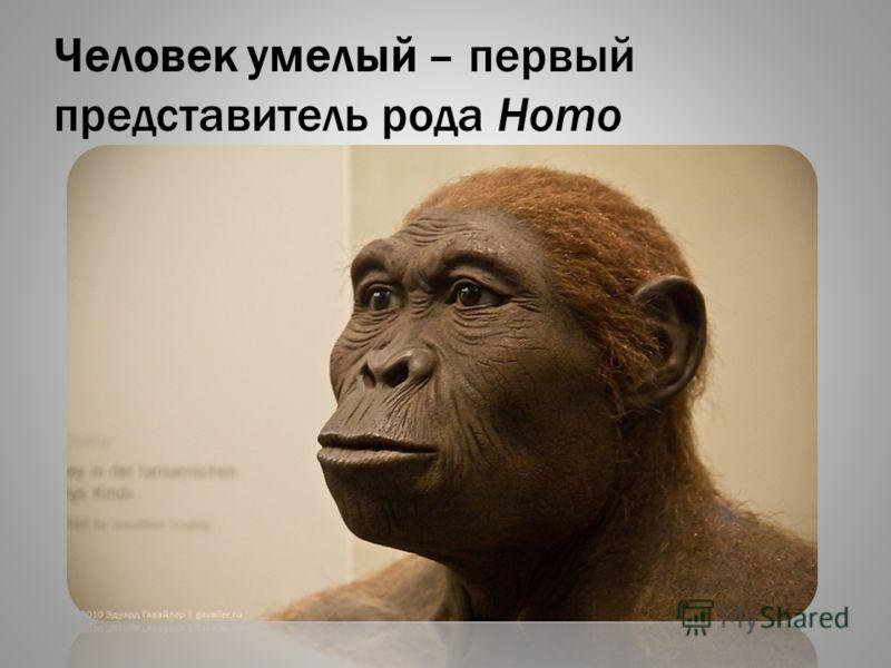 Человек умелый – первый представитель рода Homo