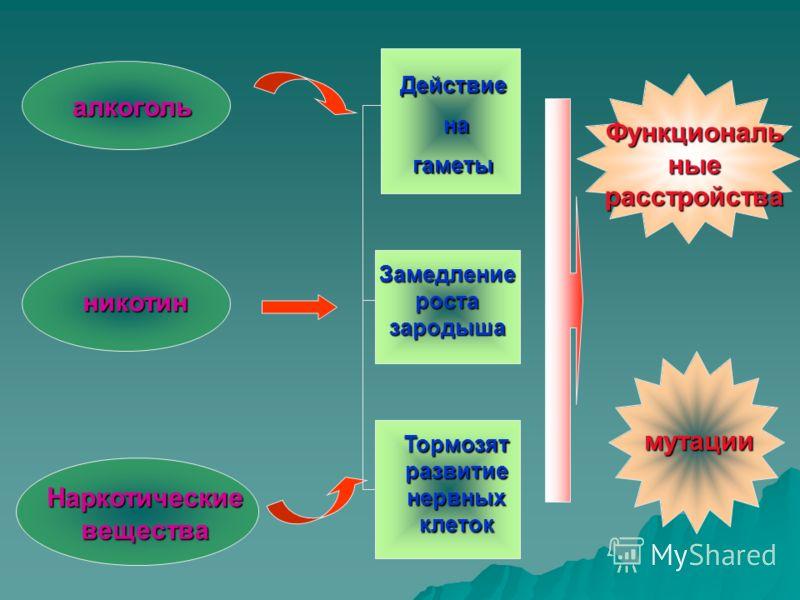 алкоголь никотин Наркотические вещества Действие на нагаметы Замедление роста зародыша Тормозят развитие нервных клеток Функциональ ные расстройства мутации