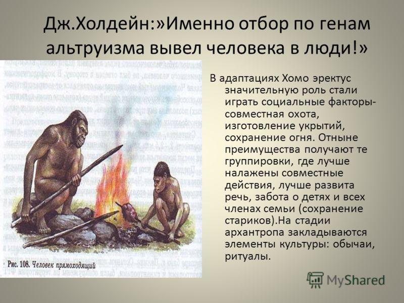 Дж.Холдейн:»Именно отбор по генам альтруизма вывел человека в люди!» В адаптациях Хомо эректус значительную роль стали играть социальные факторы- совместная охота, изготовление укрытий, сохранение огня. Отныне преимущества получают те группировки, гд