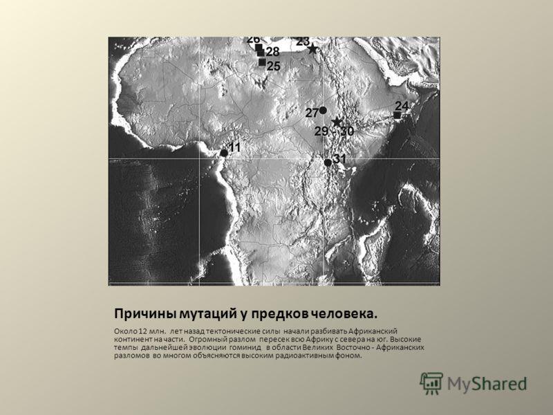 Причины мутаций у предков человека. Около 12 млн. лет назад тектонические силы начали разбивать Африканский континент на части. Огромный разлом пересек всю Африку с севера на юг. Высокие темпы дальнейшей эволюции гоминид в области Великих Восточно -